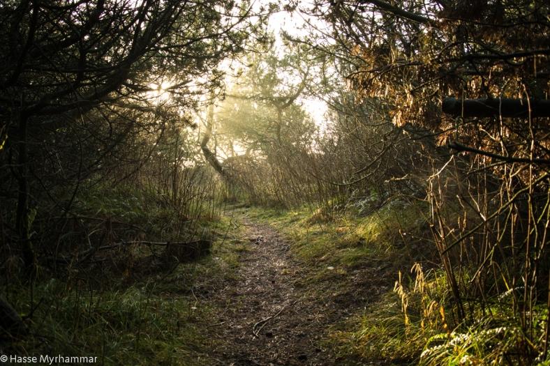 Motljus i skog