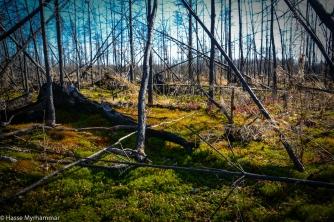 Skogsbranden